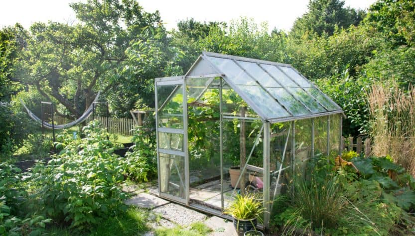 Prepare the Greenhouse for Winter