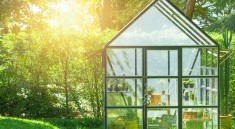 Top 10 Flowers for Growing in a Greenhouse