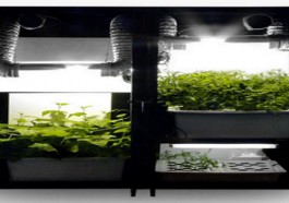 Best Grow Kits Featured Image