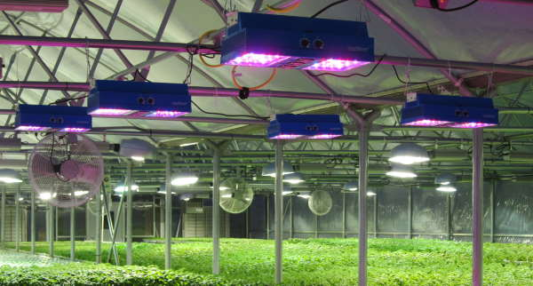 benefits of grow lights