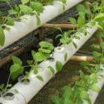 Top Hydroponic Nutrients Guide and Reviews