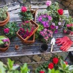 The Hidden Relaxation Benefits of Keeping a Garden