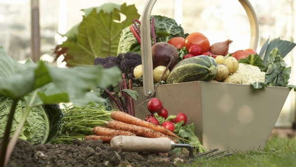 Garden Vegetables for diet