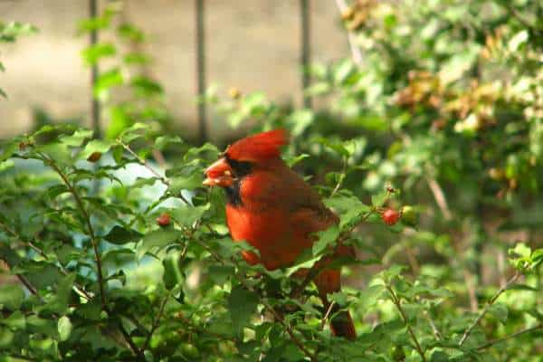 Relaxation Benefits of Keeping a Garden - Wildlife in garden
