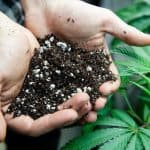 How To Choose The Best Soil For Cannabis Growing?